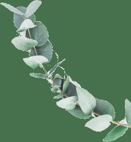 Zielona gałązka - akcent wizualny